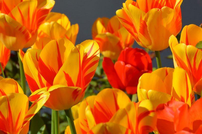 fleur jouir