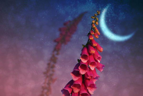jardiner-lune